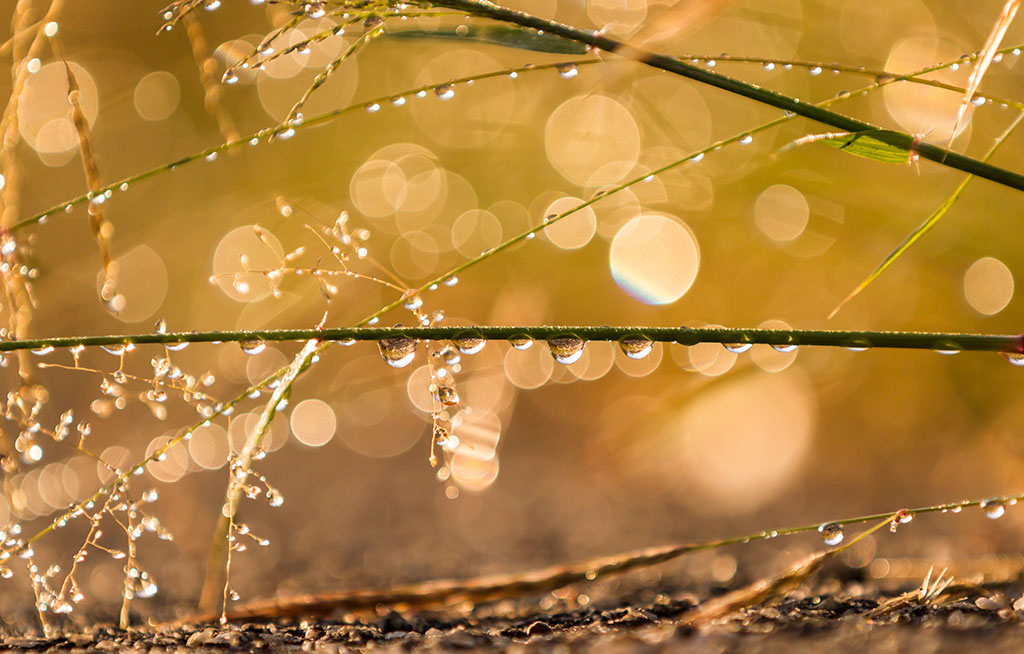 Dew-on-the-winter-grasses